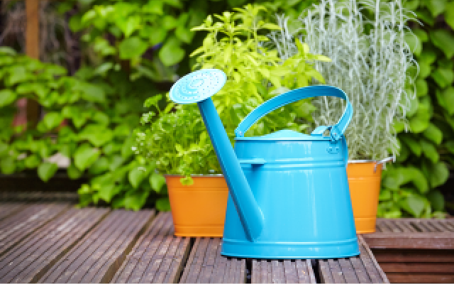 Blue watering can on a bench